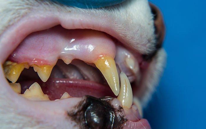 Zahnstein entfernen bei Katzen: 3 Methoden im Überblick